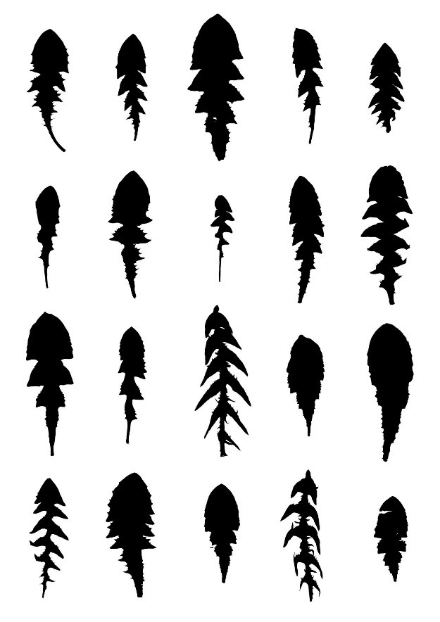 Black silhouettes of leaves on a white background.