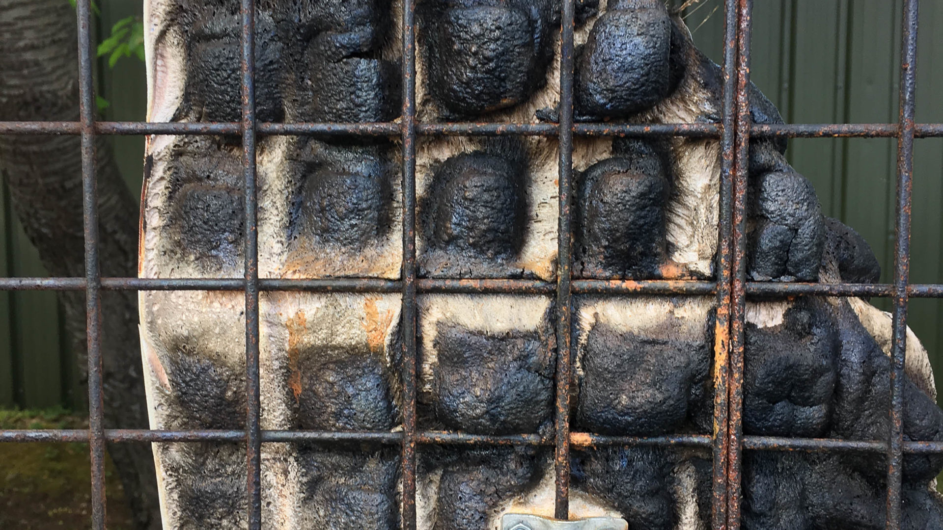 UCLan student artwork 'Charred': by Sarah Feinmann (photography)
