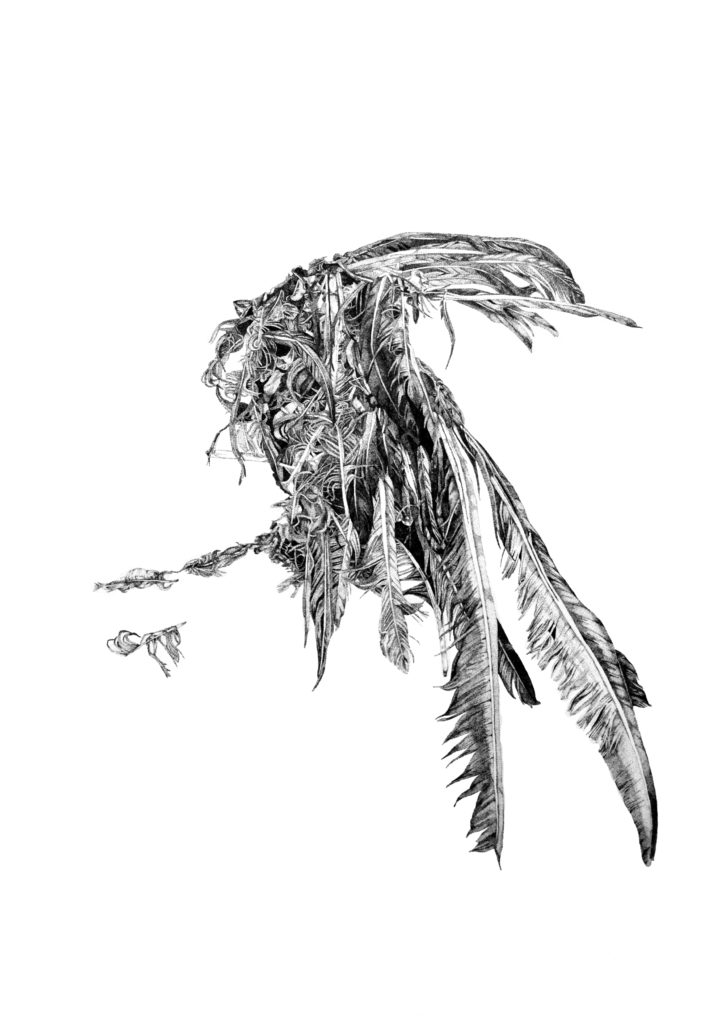 Dead bird sketched in ink